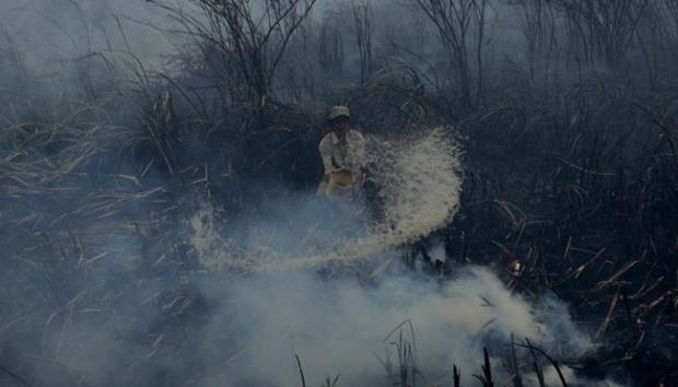 Ilustrasi upaya pemadaman kebakaran hutan. ANTARA/Nova Wahyudi